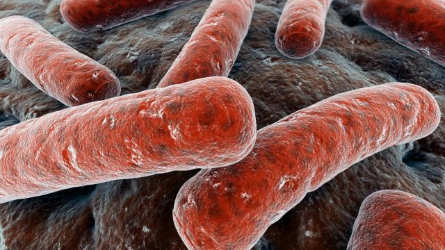 Bacterie voor het eerst uitgerust met biologische klok